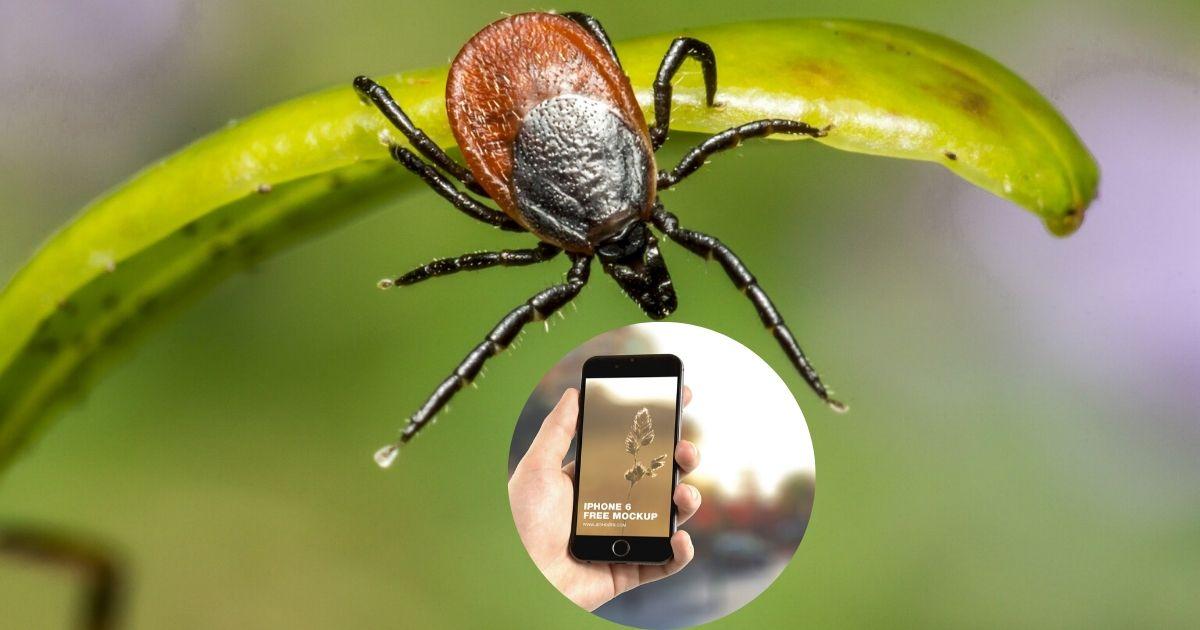 Telefony komórkowe wabią kleszcze