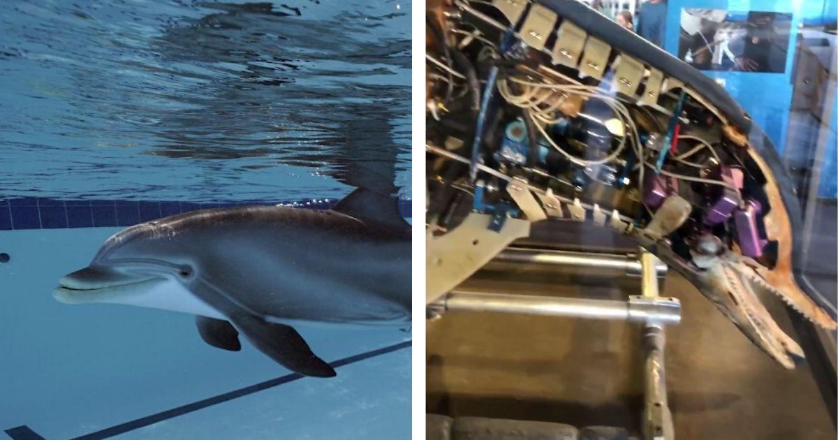 robo-delfin